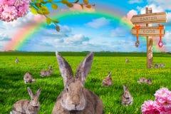 Alldeles av kaniner på grön äng med regnbågen i bakgrunden arkivbild