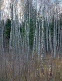 Alle Bäume sind tot stockfoto