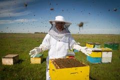 Alle Bienen sind meine Stockbild