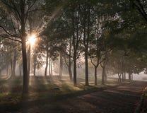 Allée brumeuse en parc Photographie stock