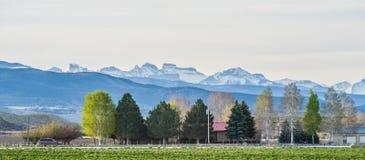 Alle colline pedemontana dei Colorado Rockies immagini stock