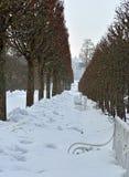 Allée d'hiver et palais de Catherine à Pushkin Photos stock