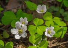 Alle Frühlingsblüte Stockfoto
