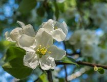 Alle Frühlingsblüte Stockbild