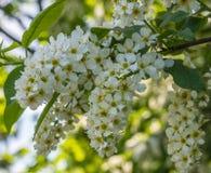 Alle Frühlingsblüte Lizenzfreie Stockfotografie