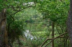 Alle grünen zwischen den Bäumen Stockfotografie
