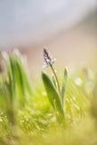 Alle Helligkeit des Frühlinges Stockbilder