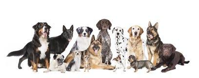 Alle Hunde Stockfotografie