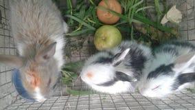 alle konijnen royalty-vrije stock fotografie