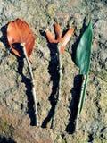 Alle natürliche Gabel, Löffel und Messer Lizenzfreies Stockbild