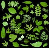 Alle soorten van groene bladeren Royalty-vrije Stock Fotografie