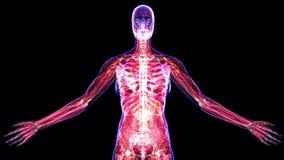Alle Systeme des weiblichen Körpers stock abbildung