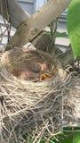 Alle uitgebroede eieren Stock Foto's