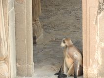 Allebei zijn in beroemde stepwell Chand Baori goed in het dorp van Abhaneri, Rajasthan, India stock afbeelding