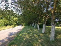Allee των δέντρων Στοκ φωτογραφία με δικαίωμα ελεύθερης χρήσης