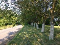 Allee деревьев Стоковое фото RF