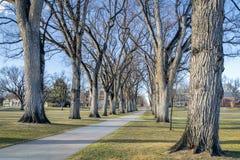 Allee с старыми деревьями американского вяза Стоковое Изображение RF