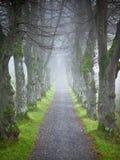 Allee de forêt d'automne Photos libres de droits