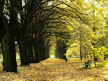 Allee der Bäume Lizenzfreies Stockbild
