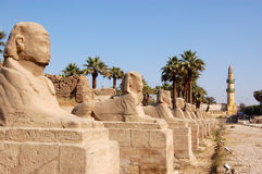 Allee der Sphinxe, Luxor Lizenzfreies Stockbild