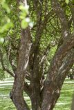 Allee des arbres Photo stock