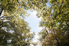 Allee in einem Park in Spanien mit Himmel Stockfoto