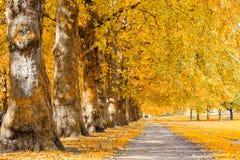 Allee gezeichnet mit Bäumen in Green Park, London lizenzfreie stockbilder