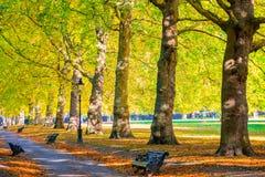 Allee gezeichnet mit Bäumen in Green Park, London stockfotos