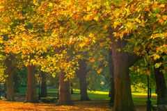 Allee gezeichnet mit Bäumen in Green Park, London stockbilder
