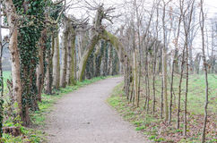 Allee hiking trail Royalty Free Stock Image