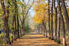 Allee landscape in autumn park Royalty Free Stock Photos