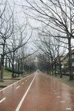 Allee mit Fahrradweg an einem regnerischen Tag Stockfoto