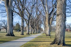 Allee with old American elm trees. In early spring - the Oval of Colorado State University campus - landmark of Fort Collins royalty free stock image