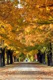 Allee unter den Bäumen Stockbild