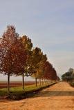 Allee von Bäumen Lizenzfreies Stockfoto
