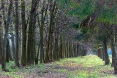 Allee von Bäumen Lizenzfreie Stockfotografie