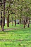 Allee von Bäumen Stockbilder