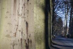 Allee von Bäumen Lizenzfreie Stockbilder