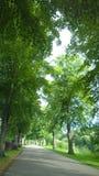 Allee von Bäumen gesäumt in England Lizenzfreies Stockbild