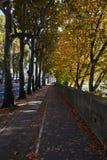 Allee von Bäumen im Park Stockfoto
