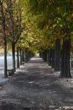 Allee von Bäumen im Park Lizenzfreie Stockfotografie