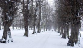 Allee von Bäumen im Schnee Stockbilder