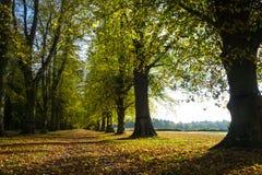 Allee von Bäumen mit Herbstlaub, nahe bei Feld Stockbild