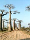 Allee von Baobabs Lizenzfreie Stockfotos