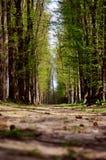 Allee von Bäumen Lizenzfreie Stockfotos
