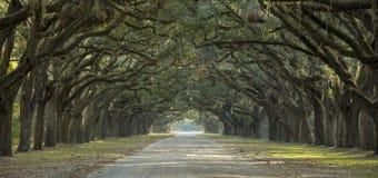 Allee von Eichen im amerikanischen Süden Lizenzfreies Stockfoto