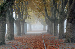 Allee von London Plantrees Stockfotos