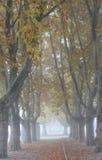 Allee von London Plantrees Lizenzfreie Stockfotografie