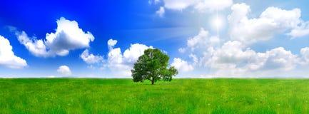 Alleen één grote boom op groen gebied. Panorama Stock Foto's