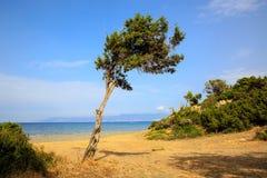 Alleen boom dichtbij overzees stock afbeelding